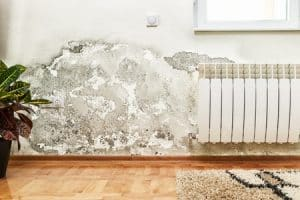 mold damage home interior